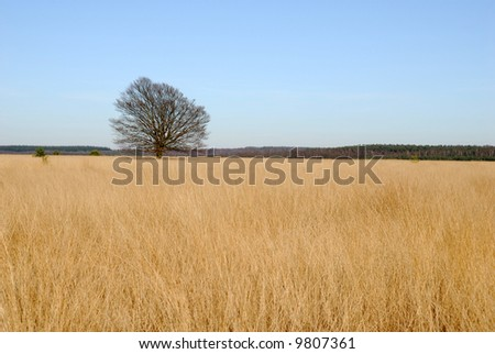 Landscape with blue sky and one tree.