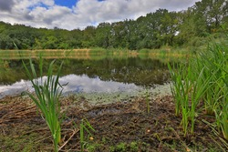 landscape with bog in forest - take it in HDR