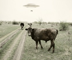 Landscape with cows and UFO