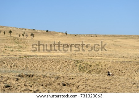 Landscape with cows grazing on the mountainside, Georgia #731323063