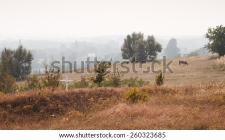 Landscape with cows. Rural landscape with cross and grazing cows. Foggy weather