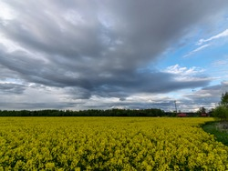 landscape with dark contrasting skies over a yellow rape field