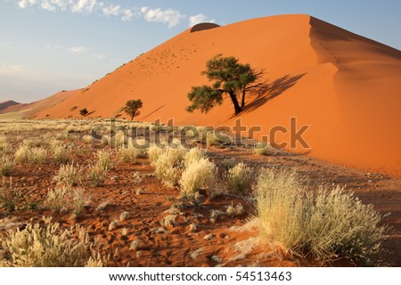 Landscape with desert grasses, red sand dune and African Acacia trees, Sossusvlei, Namibia, southern Africa - stock photo