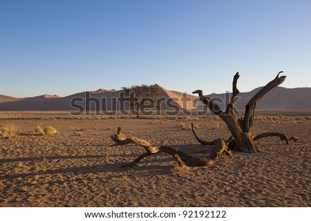 Landscape with desert grasses, red sand dune and African Acacia trees, Sossusvlei, Namibia, southern Africa