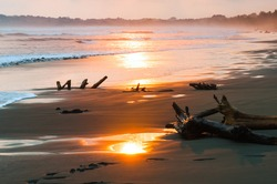 Landscape with driftwood on the beach at sunset. Central America. Costa Rica