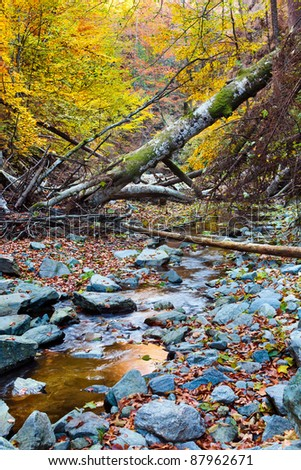 Landscape with fallen trees and a creek in the autumn