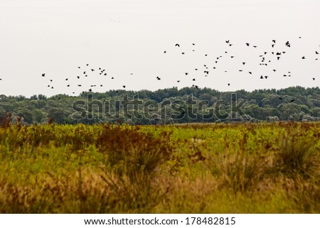 Landscape with flying birds and vegetation in the Danube Delta, Romania