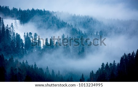 Landscape with fog among pine trees in mountain forest #1013234995