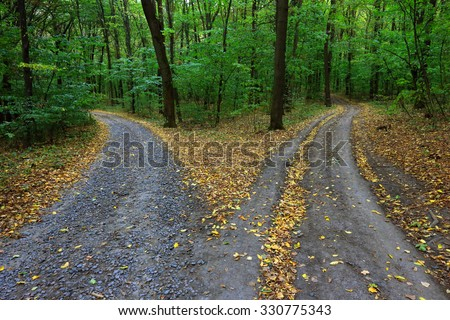 Landscape with fork rural roads in forest #330775343