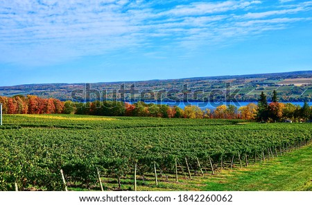 Landscape with grape vineyard, hills and Seneca Lake, in the heart of Finger Lakes Wine Country, New York. Seneca Lake is the deepest lake entirely within the state.