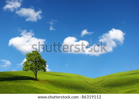 landscape with grass field and tree