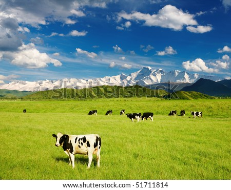 Landscape with grazing calves