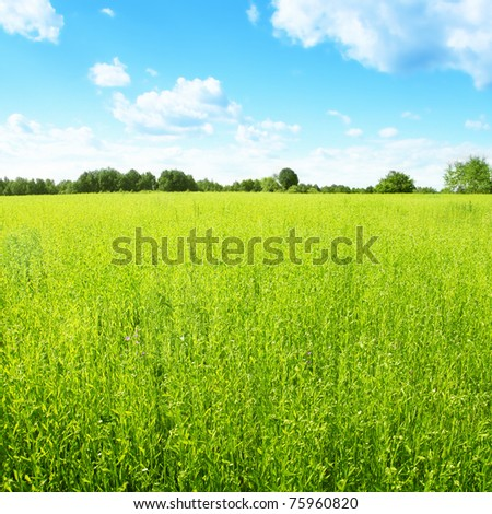 Landscape with green field and blue sky.