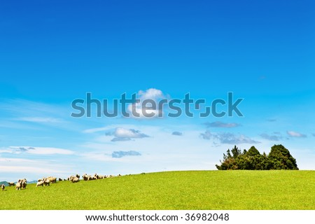 Landscape with green field and grazing sheep