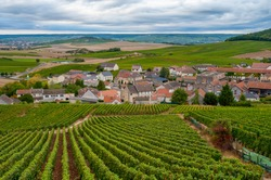 Landscape with green grand cru vineyards near Cramant, region Champagne, France in autumn rainy day. Cultivation of white chardonnay wine grape on chalky soils of Cote des Blancs.