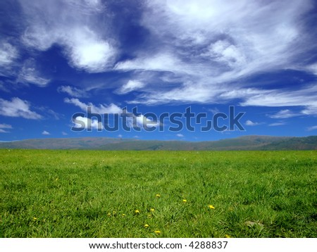 landscape with green grass and clear blue sky