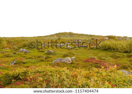 Landscape with green veronica, pink flowers and stones. Tundra. The Solovetsky Islands. Isolated.