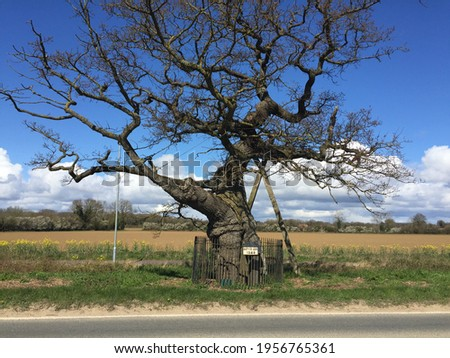 Landscape with Kett's Oak, the historic ancient oak tree marks the gathering of rural rebels of Wymondham East Anglia Norfolk during the 16th century who marched on Norwich to protest field enclosures Stock fotó ©
