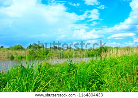 Landscape with lake surrounded with cane and white clouds. Brushwood of rush in lake. Beautiful natural landscape with pond and clouds #1164804433