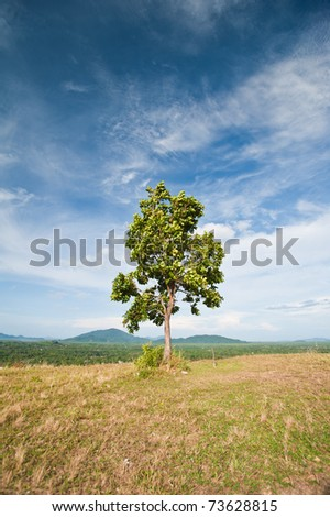 Landscape with lone green tree on the mountain top - stock photo
