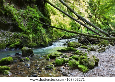 Landscape with lush forest and a river flowing through mossy boulders