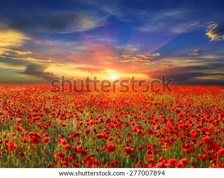 landscape with nice sunset over poppy field #277007894