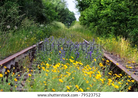 Landscape with old railway track , rail road with selective focus on Echium vulgare (Viper's Bugloss or Blueweed ) flowers  - horizontal photo