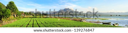 Landscape with onion fields, lake and volcano Batur at sunrise. Bali