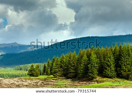 Landscape with pine forests and mountains in Romania, in summer