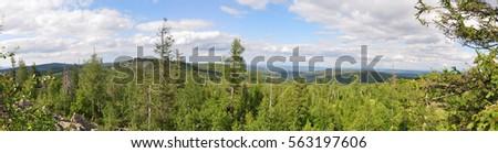 landscape with pines #563197606