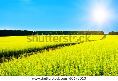 Landscape with rapeseed flowers and blue sky