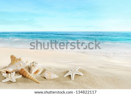 Landscape with shells on tropical beach #134822117