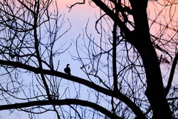 Landscape with silhouette of a bird sitting on a branch of a tree with colorful sunset sky on the background. Can be used as a background.