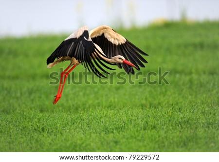 Landscape with Stork