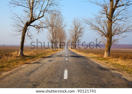 Landscape with straight empty road between poplar trees