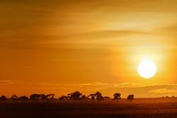 landscape with sunrise on the savanna in Kenya