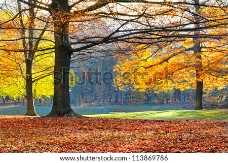 Landscape with the autumn forest. Bright colors of autumn leaves in the park. Lonely beautiful autumn tree. Old tree.