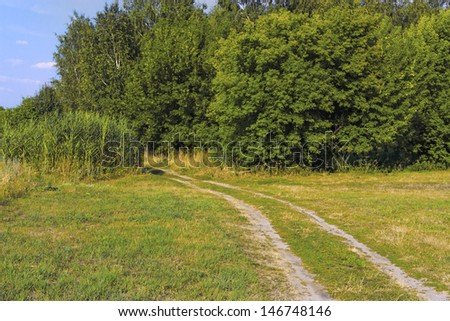 Landscape with the dirt road and woods