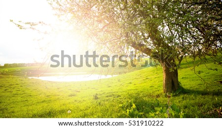 landscape with tree on the field #531910222
