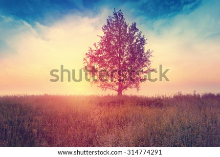 Landscape with  tree over sunrise