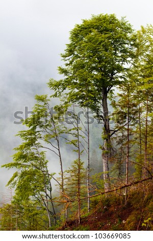 Landscape with trees in fog on a mountain - stock photo