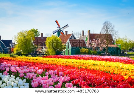 Landscape with tulips, traditional dutch windmills and houses near the canal in Zaanse Schans, Netherlands, Europe #483170788