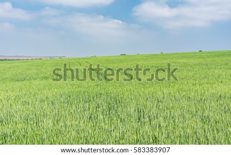 Landscape with unripe crops filed in May - Shutterstock ID 583383907
