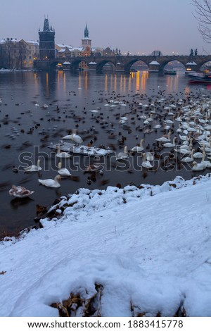 landscape with Vltava river, Karlov most, swans and ducks in Prague, Czech Republic in winter in the evening. Stock photo ©