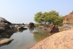 landscape with water trees and rocks like a sea cost