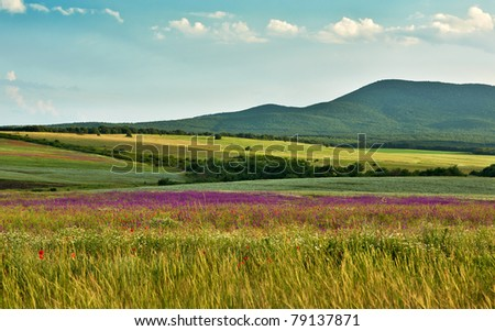 Landscape with wild spring flowers of the field blossoms