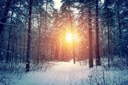 Landscape with winter forest and bright sunbeams. Sunrise, sunset in beautiful snowy forest.
