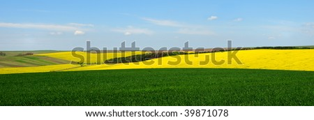 Landscape with yellow rapeseed and green wheat fields against blue sky