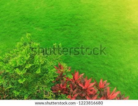 Landscaped formal garden park design top view, green grass with bush gardening.