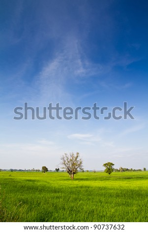 Landscaped paddy and tree under the blue sky